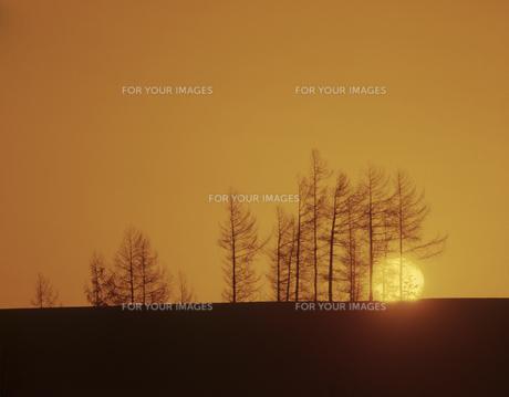 雪原の並木と日の出の素材 [FYI00953246]