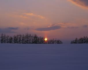 雪原の並木と日の出の素材 [FYI00953248]