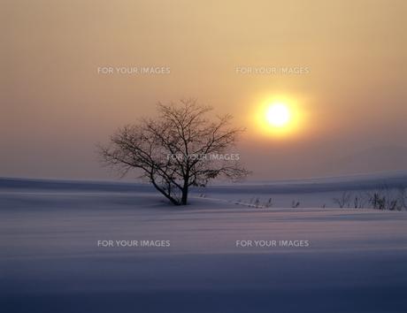 雪原の立木と夕日の素材 [FYI00953251]