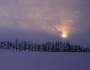 雪原の並木と日の出の素材 [FYI00953254]