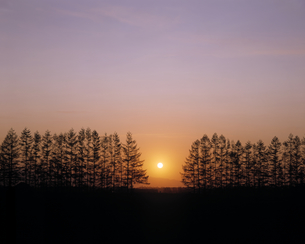 雪原の並木と日の出の素材 [FYI00953271]