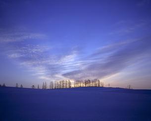 雪原の並木と朝焼けの素材 [FYI00953276]