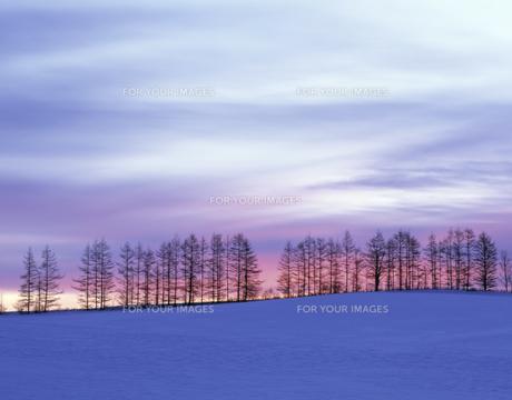 雪原の並木と朝焼けの素材 [FYI00953283]