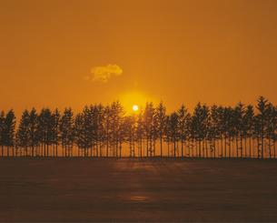 雪原の並木と日の出の素材 [FYI00953288]
