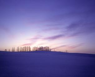 雪原の並木と朝焼けの素材 [FYI00953289]