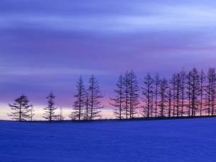 雪原の並木と朝焼けの素材 [FYI00953295]