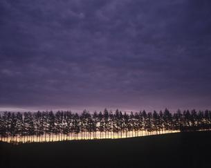 並木と日の出の素材 [FYI00953297]