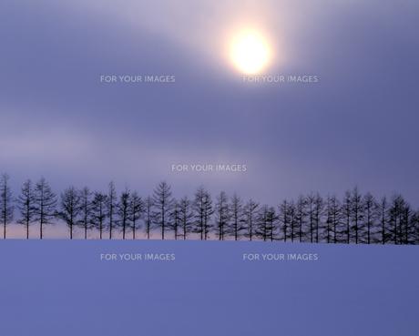 雪原の並木と朝日の素材 [FYI00953299]
