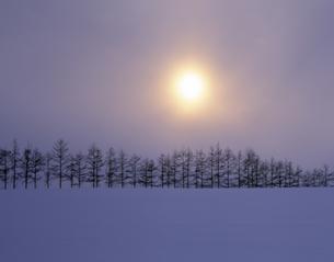 雪原の並木と朝日の素材 [FYI00953306]