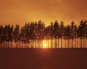 雪原の並木と日の出の素材 [FYI00953311]