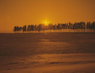 雪原の並木と日の出の素材 [FYI00953318]