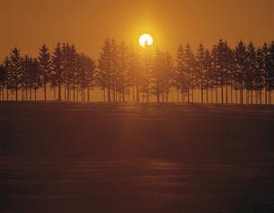 雪原の並木と日の出の素材 [FYI00953339]