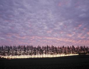 並木と日の出の素材 [FYI00953346]