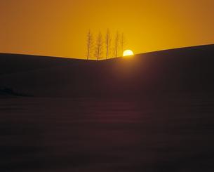 雪原の立木と夕日の素材 [FYI00953383]