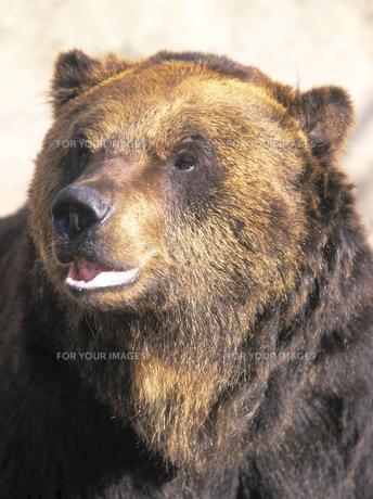 熊の素材 [FYI00953557]