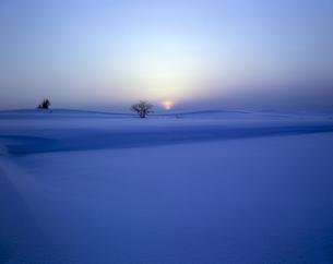 夕暮れの雪原と立木の素材 [FYI00953941]