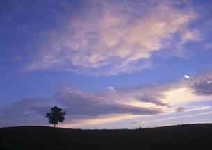 丘の上の一本木の夕暮れの素材 [FYI00953983]