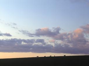 牧場の夕暮れの素材 [FYI00953987]