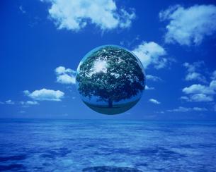 海の上の大樹の玉の素材 [FYI00954378]
