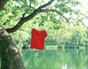 新緑の沼と洗濯物の素材 [FYI00954386]
