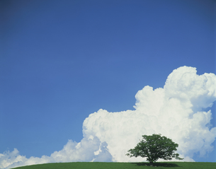入道雲と大樹の素材 [FYI00954821]