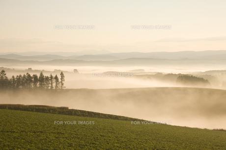 朝霧と日の出の素材 [FYI00955032]