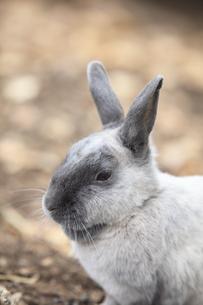 ウサギの素材 [FYI00955627]