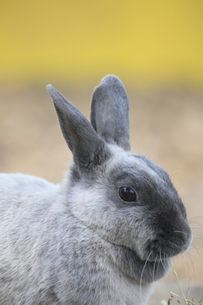 ウサギの素材 [FYI00955676]
