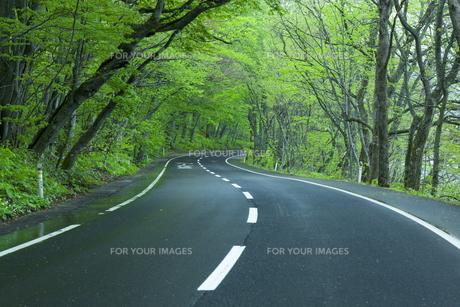 雨上がりの新緑の道の素材 [FYI00956561]