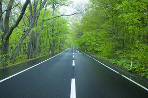 雨上がりの新緑の道の素材 [FYI00956585]