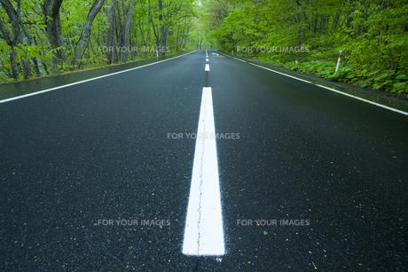 雨上がりの新緑の道の素材 [FYI00956614]