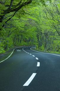 雨上がりの新緑の道の素材 [FYI00956658]