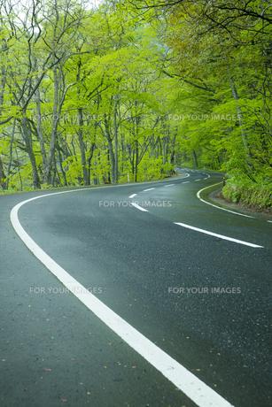 雨上がりの新緑の道の素材 [FYI00956688]