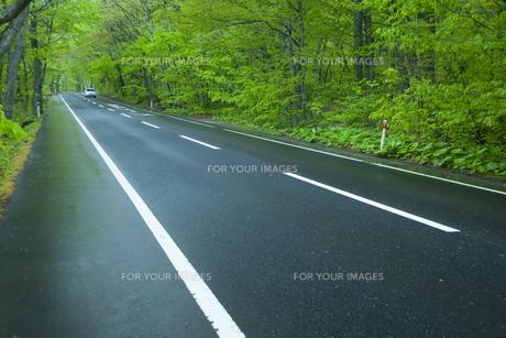 雨上がりの新緑の道の素材 [FYI00956701]
