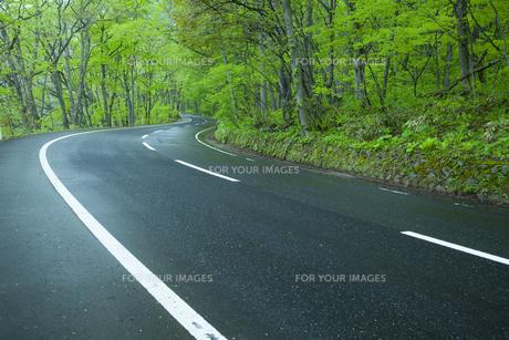 雨上がりの新緑の道の素材 [FYI00956706]