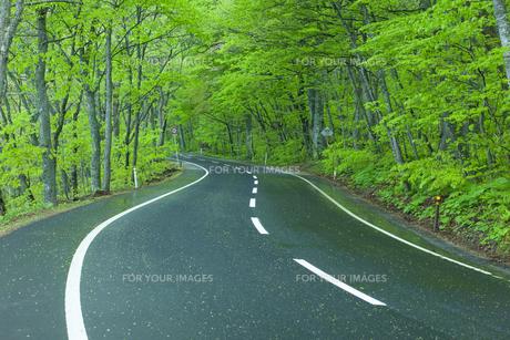 雨上がりの新緑の道の素材 [FYI00956711]