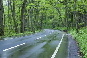 雨上がりの新緑の道の素材 [FYI00956715]