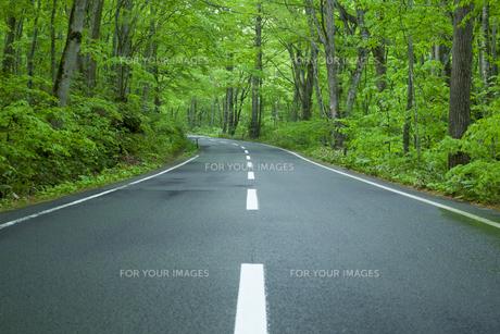 雨上がりの新緑の道の素材 [FYI00956725]