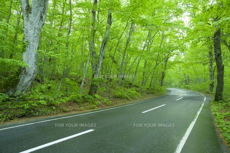 雨上がりの新緑の道の素材 [FYI00956751]