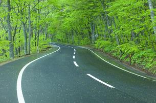 雨上がりの新緑の道の素材 [FYI00956759]
