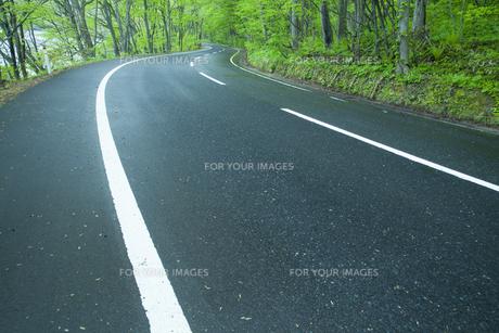 雨上がりの新緑の道の素材 [FYI00956760]