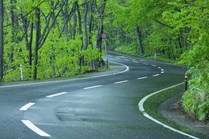 雨上がりの新緑の道の素材 [FYI00956761]