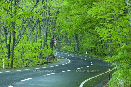 雨上がりの新緑の道の素材 [FYI00956777]