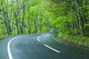 雨上がりの新緑の道の素材 [FYI00956819]
