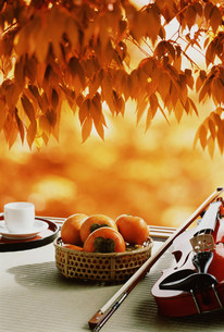紅葉と縁側に置かれた柿とバイオリンの素材 [FYI00959752]