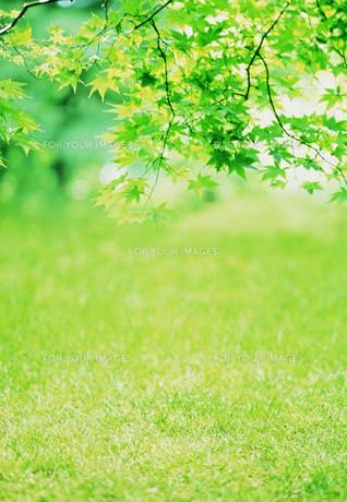 新緑のイメージの素材 [FYI00959786]