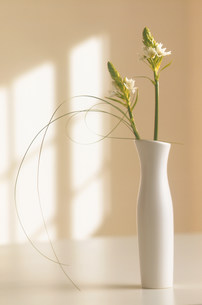 生けられた花の素材 [FYI00959812]