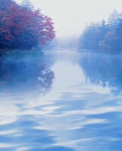 水面に映る木々イメージの素材 [FYI00959819]