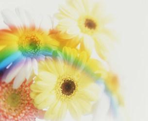 花の素材 [FYI00960205]