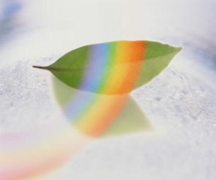 葉と虹の素材 [FYI00960210]